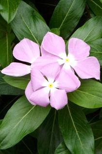 Lila Blüten von lorenzo-fp