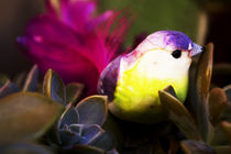 Bird and Nature by Nelson Jaramillo Vasquez
