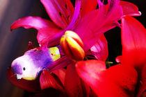 Lily and beuaty bird by Nelson Jaramillo Vasquez