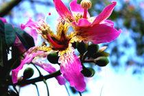 Pink by Nelson Jaramillo Vasquez