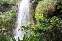 Wasserfall-amazonas