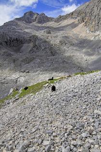 in den Alpen von Jens Berger