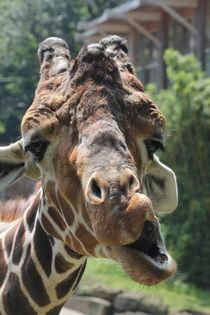 Giraffe by Michaela Rau