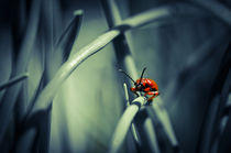 Firebug by spotcatch-net-photography