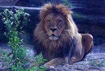 Löwe von Wolfgang Dufner