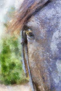 Horse Whisperer 2 von bibi-photo-hunter