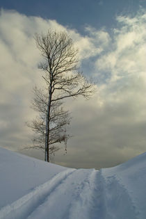 Winter time by dagino