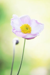 Pretty flower by AD DESIGN Photo + PhotoArt