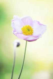 Pretty flower von AD DESIGN Photo + PhotoArt