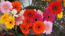Flower power by Milena Zindovic