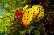 Autumn Rain by Keld Bach