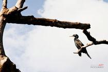 Lagoon-bird1-sig