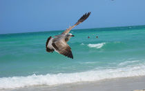 'Seagull - Miami Beach' by Zoila Stincer