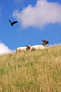 Glückliche Schafe  by AD DESIGN Photo + PhotoArt