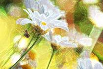 Spinne und Gänseblümchen by Bastian  Kienitz