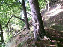 Steilküste Wald by A. K.  Gartz