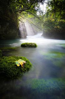 Autumn by spotcatch-net-photography