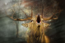 Automn - Season of the king by cdka