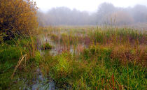 Misty Wetlands by Keld Bach