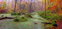 The Swamp by Keld Bach