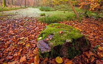 Mossy Rock by Keld Bach