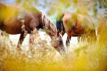 Horse herd von Tamara Didenko