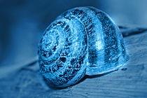 Schneckeblau
