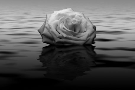 Rose-cropped1
