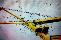 Vogelschwarm by pahit