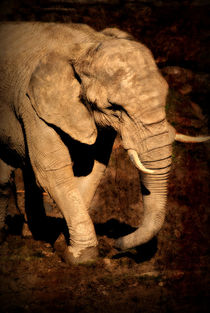 Elefant von Elke Balzen