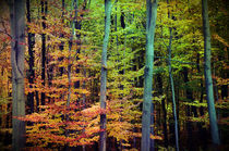 Forest autumn von dagino