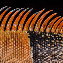 Spines by Keld Bach