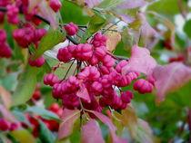 Herbst in Pink by Heidrun Carola Herrmann