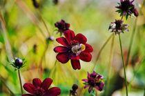 Bumblebee by kwiatek