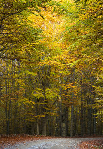 Fall colors von Christos Andronis