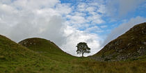 Sycamore Gap III by David Pringle