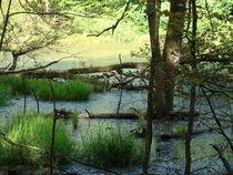 Herbstwald von Ka Wegner