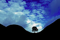 Sycamore Gap Silhouette by David Pringle